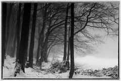 Kreuzberg-3 (conrad.seegers) Tags: bomen bos sneeuw fransizkaner klosterbier bier keuzberg monastery klooster schnee wald baum park landschaft landstras
