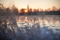 Frosty morning 2 (xkolba) Tags: sunrise outdoor landscape podlasie canoneos5dmkii river riverbank winter frost grass nature plant bokeh takumar 50mm f14 smctakumar50mmf14 m42 depthoffield