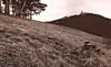 Burg Teck / Teck Castle (Chris Kex) Tags: burg teck kirchheim owen schwäbische alb hohenbol pine trees kiefer kiefern kiefernwäldchen swabian albrand berge berg hills mountains mountain sky himmel wolken landschaft landscape landschaftsfotografie deutschland