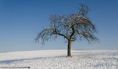 A sunny winter day outside of Dahenfeld. (andreasheinrich) Tags: landscape tree field winter february afternoon sunny cold germany badenwürttemberg neckarsulm dahenfeld deutschland landschaft baum feld februar nachmittag sonnig kalt nikond7000