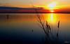 ___ attimi di poesia! ___ (erman_53fotoclik) Tags: mediacom s501 attimi poesia lagunasud chioggia tramonto sunset acqua orizzonte riflesso atmosfera imbrunire canne piante riva pali profili erman53fotoclik