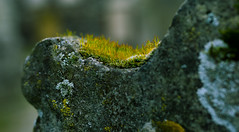 Grave stone with moss ... (Julie Greg) Tags: stone moss nature details macro