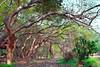 Tree Branches (Shojib77) Tags: tree branches botanicalgarden color dhaka green beautifulnature beautifultrees sky nature bangladesh shojib nikon nikon1855mm lightroom