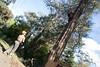 Arborist 1 (Tree Access) Tags: belgrave clients treeaccess family