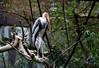 Painted stork (Millie (On and Off)) Tags: paintedstork bird animal animalplanet bronxzoo newyork trees zoo