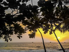 """""""In dwelling, live close to the ground. In thinking, keep to the simple. In conflict, be fair and generous. In governing, don't try to control. In work, do what you enjoy. In family life, be completely present."""" ―Lao Tzu 🌅 🌴 🌊"""