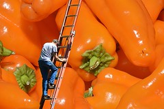 Billboard Maintenance (swong95765) Tags: pepper peppers gigantic large huge enormous ladder climb climbing ripe