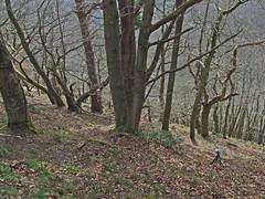 Recording wind chimes and birds, woods above Fingle Bridge (Philip_Goddard) Tags: europe unitedkingdom britain british britishisles greatbritain uk england southwestengland devon dartmoornationalpark drewsteignton teignvalley teigngorge drewstonwood finglebridge recording windchimes views scenery landscapes woodland wood valley hill