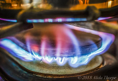 stovetop flame (Alida's Photos) Tags: macromondays flame fire stovetop naturalgas gas propane blueflame cookingwithgas cooking macro macros mini small closeup macrolens