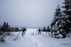 Camp Mercier - Réserve faunique des Laurentides - Wildlife Reserves ...3 (hmeyvalian) Tags: campmercier nationalparkssépaq québeccanada skidefond crosscountryskiing scidifondo canon7dmarkii tamron 16300mm f3563 di ii vc pzd b016