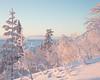 Idre XI (Gustaf_E) Tags: clouds cold dalarna dimma dis forest gran idre kallt landscape landskap mist moln pine pines skog snö snow spruce sverige sweden tall vinter winter woods