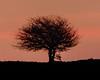 Sunrise Lone Tree (RichRobson) Tags: lone tree cheeseden valley rochdale sunrise long exposure silhouette