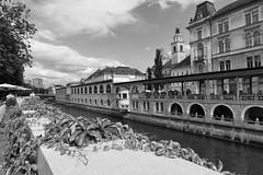 Walking Ljubljana (virtualwayfarer) Tags: slovenian europe city streetphotography streetphotos sonyalpha a7rii historiccity historic architecture urban vine canals vines ivy leaves travel travelphotography slovenia feelslovenia ljubljanicariver ljubljanica
