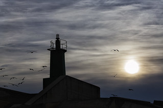 The lighthouse and the seagulls