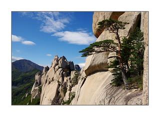 Le pin alpiniste / Ulsan Bawi