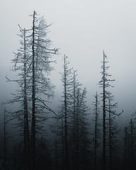 Darkness (fedorcorobert) Tags: darkness moody tree forest travel nature adventure landscape lightroom nikon tatry hightatras tatras