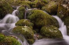 Mountain stream (einaz80) Tags: roaschia stream ruscello mountain montagna gesso valle val valley water acqua moss muschio longexposure velvet effect vallegesso valgesso gessovalley cuneo cuneese piemonte piedmont italia italy waterfall