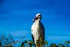 DSC_6362.jpg (b0n2a1) Tags: 2017 grandcirclecruiseline hunawihr naturoparcexcentredereintroduction rhineriver routederibeauville storks animalpark swanmvrhapsody