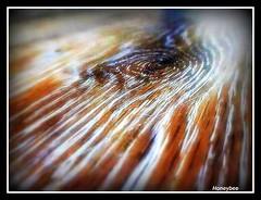 EYE OF THE STORM--Photography by Faith Honeybee Setley (honeybee025) Tags: macro wood faithsetley lightplay woodgrain closeups samsung cameragirl color hurricanes abstractphotography interpretive focus lighting photographer