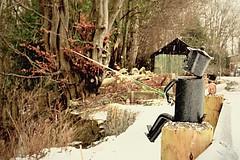 Tin man snow fishing on the fence....xx.       (Explored #170) (shona.2) Tags: scotland roslin edinburgh winter snow fishing tinman friday hff fence