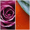 07 / 52 : 1 (Randomographer) Tags: 52weeks diptych rose flower orange mandarin organic fragrant aroma valentinesday gift pleasant sweet smell fruit combo leaf petals 7 52 2018