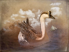 Swan-Goose-Anser-cygnoides (laxwings) Tags: bird swan goose ship ocean anser fineart photoshopartistry photoartistry photomanipulation