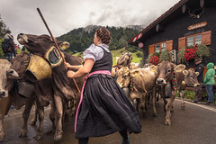 Allgäu Feeling (Martin Zurek) Tags: allgäu bayern deutschland gunzesried oberallgäu sonthofen viehscheid kuh cow animal person people tradition photojournalism documentation culture building road village