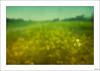 Única, diferente, especial...(Explore 18/02/2018) (V- strom) Tags: flor flower campo countryside paisajes landscape amarillo verde green yelow texturas textures nikon nikon2470 nikon105mm nikond700 primavera spring vstrom naturaleza nature homenaje homage luz light recuerdo memory selectivefocus enfoqueselectivo hierba grass cielo sky