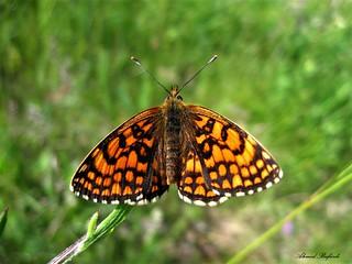 Butterfly 1553