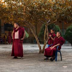 Asia / Nepal / Kathmandu / Tashi Samtenling Monastery (Pablo A. Ferrari) Tags: pabloferrariart asia nepal kathmandu tashisamtenlingmonastery boudhanath buddhism monks monk monjes sacerdotes seminaristas estudiantes students monasterio monastery