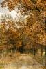 The path (ILO DESIGNS) Tags: 2016 artística camino color diciembre guadarrama melojar naturaleza otoño paisaje retro sanmamés nature naturallight texturing autumn fall path road trees oak walk europe spain madrid wildlife forest woods cloudy