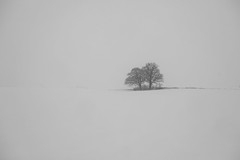Trees in white landscape (Xtraphoto) Tags: monochrom sw bw white schnee snow winter landschaft landscape bäume trees zwei two