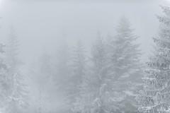 Douceur de l'air froid (Samuel Raison) Tags: hautsplateauxduvercorsfévrier2018 hautsplateauxduvercors vercors hiver neige brouillard brumes froid winter fog nikon nikond800 nikon2870200mmafsvr
