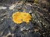Seashore Lichens (JulieK (thanks for 6 million views)) Tags: lichen blacktarlichen orangelichen rock verrucariamaura 2018onephotoeachday canonixus170 beautifulnature baginbunhead seashore coast