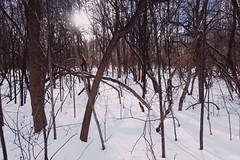 Gray's Creek Conservation Area (Richard Pilon) Tags: forest nature winter grayscreek conservationarea cornwall canon grayscreekconservationarea ontario powershot snow