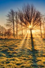 Beautiful Winter Sunrise (Corvin Gröning) Tags: beautifulview bluesky burningsky field glowingsky grass landscape nature sky sunny sunrise tree trees warm winter flensburg schleswigholstein germany de