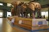 AMNH_022718-016 (bribakove) Tags: 2018 americanmuseumofnaturalhistory nyc upperwestside