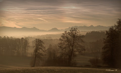 Dreamland (Renata1109) Tags: gras nebel sonnenaufgang wald landschaft himmel berg baum sky mountain fog sunrise clouds tree landscape aussichten bayern deutschland bavaria germany wood