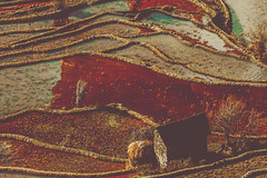 _MG_9891 (gaujourfrancoise) Tags: china chine yunnan gaujour paddyfields yuanyang yuanyangcounty ricepaddyterracing worldheritagesite rizièresenplateau ocher ocre abstract abstrait