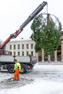 The pieces of the Christmas tree removed - Oslo, Norway