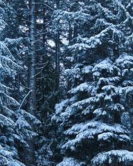 Nothing like a little snowfall (briannalhendricks) Tags: cold canonrebelt6 canonrebel canon winter trees snowfall snow