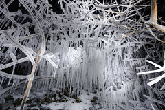 Ice Prison (Cristiano Pelagracci) Tags: ice snow nature cold winter tree calaverna freezingrain freeze neve forest coldtemperature frost branch season frozen outdoors weather woodland white landscape scenics backgrounds beautyinnature nopeople