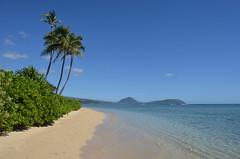 Calm Hawaii Beach (trailwalker52) Tags: oahu hawaii beach ocean palmtree hawaiikai relaxing peaceful calm