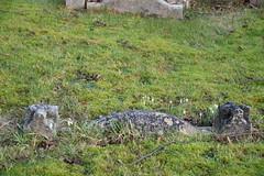 DSC_9078 Marston Oxfordshire Village St Nicholas Church Cemetery (photographer695) Tags: marston oxfordshire village st nicholas church cemetery