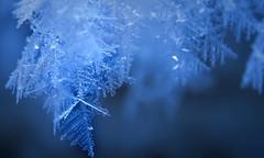 A snowflakes (Dr-Chomp) Tags: winterglitz snowflake winter freeze bluelight nature canada publicdomain canadian globalwarming davidsuzuki