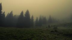 Uphill (Netsrak) Tags: alpen alps berg berge eu europa europe kleinwalsertal nebel fog mist mountain mountains wald natur grün sommer summer riezlern vorarlberg österreich at