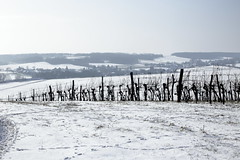 February sunlights (verblickt) Tags: countryside country winterscene rural weinviertel loweraustria winter cold snow fields vineyards sunny