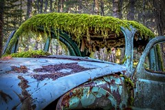 Moss Bangs (Paul Rioux) Tags: vessels car automobile transportation vw volkswagen bug beetle old decay decayed decaying delapidated relic abandoned forgotten discarded rust rusting moss prioux trees forest woods outdoors patina