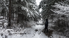 Admiring the winter scene (Milen Mladenov) Tags: 2018 bulgaria montana forest looking park path person pinetrees road season seasonal snow snowfall snowing snowyroad snowywinter standing trees view walk winter winterday winterforest