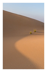 Two plants (jelleteusink) Tags: desers sand patterns nature simple sky blue plants